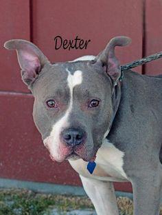 Dexter (ID)