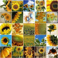 Sunflower mosaic by Raincloud? Sunflower Head, Sunflower Quotes, Sunflower Pictures, Sunflower Fields, Wild Sunflower, Sunflower Clipart, Sunflowers And Daisies, Van Gogh Sunflowers, Happy Flowers