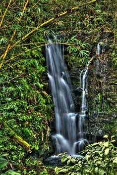 Akaka Falls State Park, Hawaii, USA (The Big Island)
