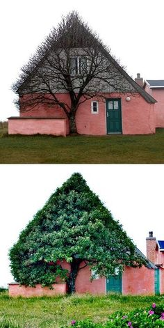 I love the way this tree complements this home! It looks like it's from a fairy tale!
