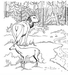 zoo_013 Zoo coloring pages