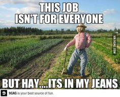 Hay.  It's in my jeans