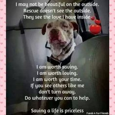 Please go see your local shelter dogs. Adopt, there's a pet out there waiting fo… Please go see your local shelter dogs. Adopt, there's a pet out there waiting for you… Shelter Dogs, Rescue Dogs, I Love Dogs, Puppy Love, Animals And Pets, Cute Animals, Pet Sitter, Pitbulls, Amor Animal