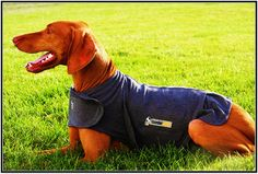 We are giving away THUNDERSHIRTS TODAY (11/13) to lucky dog parents who submit letters to their dogs at www.alettertomydog.com