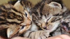 Cats Protection rehoming problem, with economy a factor