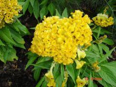 Flowers Photo by Wyattearp52 | Photobucket