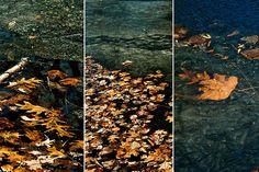 Melting Pond by elrina753, via Flickr