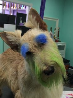 Turbo, says, GO SEAHAWKS ! www.theupscaletail.us.  The UpScale Tail Pet Grooming Salon, Naperville