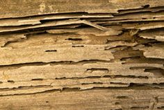 Do Termites Treatment Properly With Our Guide