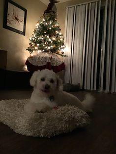 Puppy Love, Christmas Tree, Puppies, Holiday Decor, Home Decor, Teal Christmas Tree, Cubs, Decoration Home, Room Decor