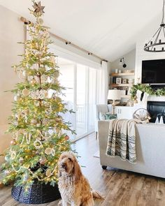 Set the scene for a happy holiday season. Get the look at theshadestore.com // Design by ShiplapAddict Dining Room Windows, Elegant Dining Room, Container Store, Design Consultant, Window Treatments, Christmas Tree, Blinds, Swatch, Holiday Decor