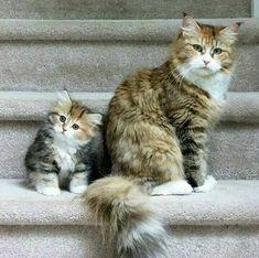 mini me cats ile ilgili görsel sonucu