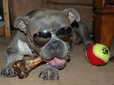 cool staffy!