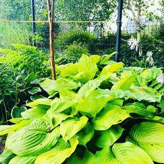 Plant Leaves, Vegetables, Plants, Vegetable Recipes, Plant, Veggies, Planets