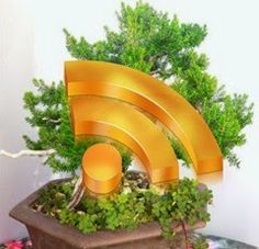 Il meglio di Hobby Bonsai nel mese di Agosto 2014: i 10 articoli più cliccati. Bonsai, Planter Pots, March, String Garden