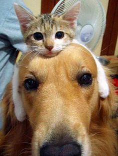 5 strange and amazing pets friendships ~ The Pet's Planet