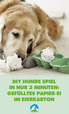 Ein neues Hunde DIY Spiel in nur 3 Minuten Vorbereitungszeit: Papier-Ei im Eierkarton! Jetzt bei uns im Haustier Notfallkarte Hunde Blog! #hunde #erziehung