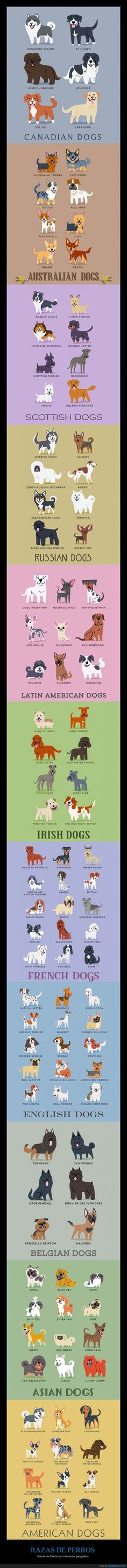 Types of dogs by region