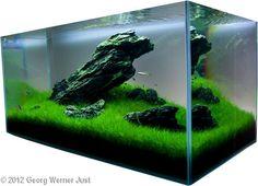 2012 AGA Aquascaping Contest - Entry #189