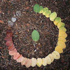 autumn color wheel (Andy Goldsworthy?)