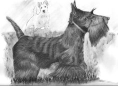 http://www.charcoal-drawings-prints.com/wp-content/gallery/animals/scotty-and-wheaten-dogs.jpg