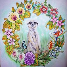 Picture perfect  Sweetly coloured by @lendast_coloring -  Meerkat #magicaljungle #johannabasford #coloring #coloringbookforadults #coloringbook #coloringtime #coloringtherapy #art  #mycreativeescape #adultcoloring #adultcoloringbook #wonderfulcoloring #coloring_secrets #creativelycoloring #artecomoterapia  #ilovecoloring #madaboutcoloring #rainbowdoodlers #regrann - more @ RainbowDoodlers.com