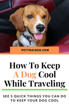 Are you planning to go on a trip with your dog? If it's hot weather there are many risks while traveling such as heatstroke. See our post on how to keep a dog cool while traveling. Dog safety tips, summer tips for dogs, dog care tips, tips for dogs, how to prevent heatstroke in dogs. #dogcare #DogOwnerTips #DogHealth #summer Toilet Training, Crate Training, Dog Training, Dog Health Tips, Cat Health, Dog Safety, Safety Tips, Health Questions, Going On A Trip