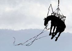 A Los Angeles County Fire Department helicopter carries a horse to Bowen Ranch in rural Apple Valley... - James Quigg, The Daily Press via AP