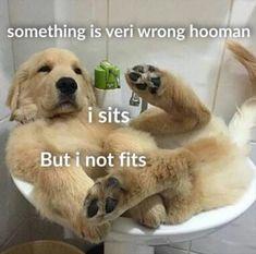 Funny Animal Picture Dump 27 Pics