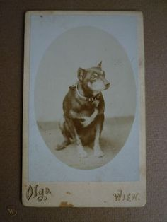 CABINET PHOTO DOG - CDV DOG - CABINET CARD DOG - CARTE DE VISITE DOG | #423879231