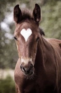 I love the perfectly shaped heart on the horse!