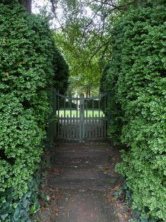 Direct foot traffic naturally by planting & keeping hedges Back Gardens, Outdoor Gardens, Verticle Garden, Colonial Garden, Growing Gardens, Garden Gates, Garden Hedges, Love Garden, Garden Styles