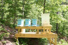 hillside apiary