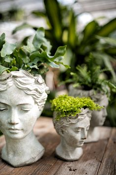 Forest Maidens, Fauna Queens Lush green crowns adorn these elegant statuary planters, each a beautiful female face. These cement cast busts are a beautiful home accent, especially. Deco Floral, Lush Green, Plant Decor, Woman Face, Belle Photo, Indoor Plants, House Plants, Beautiful Homes, Sculptures