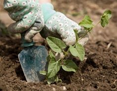Fall Gardening - clean out your garden and prepare for winter.. Great tips