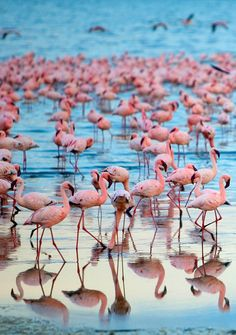 Go on a safari in Kenya, and you may see flocks of flamingoes Outdoor Adventures, Canoe, Vacation Ideas, Simply Beautiful, Kenya, The Great Outdoors, Animals And Pets, Flamingo, Safari