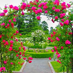Captivating Why Rose Gardening Is So Addictive Ideas. Stupefying Why Rose Gardening Is So Addictive Ideas. Garden Images, Garden Pictures, Garden Photos, Beautiful Gardens, Beautiful Flowers, Rose Arbor, Rose Garden Design, Rose Trellis, Little Presents