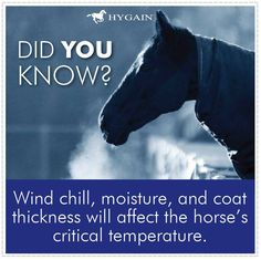 When environmental temperatures (including wind chill) drop below 0°C (referred to as the critical temperature), significant amounts of energy are used by the horse to maintain its internal body heat.