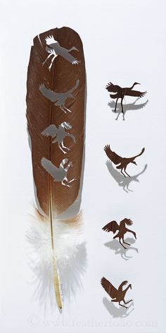 Soft Landing . crowned crane feather . 2015 . Chris Maynard . featherfolio