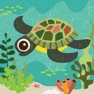 #turtle