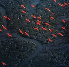 """The """"bird"""" is perhaps the best known aerial photographer on the planet, Frenchman Yann Arthus-Bertrand. He has sold more than 3 million copies worldwide of his photo essay"""