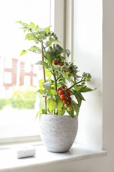 Grey concrete flower pot and tomato plant from Hornbach | Marble candle holder from Granit  | Krystal Interior