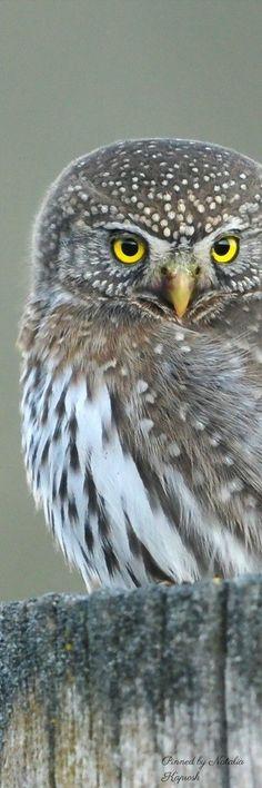 AMAZING OWL SHOT  by Natalia Kaprosh