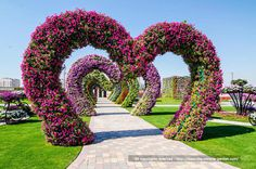 Dubai showcases the world's largest flower garden. Yet another awe-inspiring project has been completed in Dubai. It's called the Dubai Miracle Garden and co. Most Beautiful Gardens, Beautiful Flowers Garden, Large Flowers, Beautiful Places, Beautiful Hearts, Amazing Gardens, Dubai Miracle Garden, Million Flowers, Garden Art