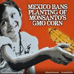 Mexico Bans Planting Of Monsanto's GMO Corn. More: http://www.island.lk/index.php?code_title=92236&page=article-details&page_cat=article-details