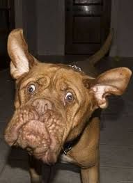 50 best funny face dogs images on pinterest funny dogs silly dogs cute captions 26 daily awww funny captions make cute photos better photos voltagebd Images