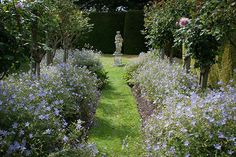 Spring Garden, Town Place | Blue geraniums planted beneath s… | Flickr