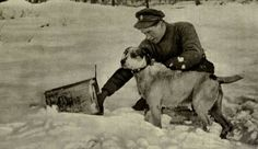 20 Incredible Pictures Of Brave Animals On The Battlefields Of World War I