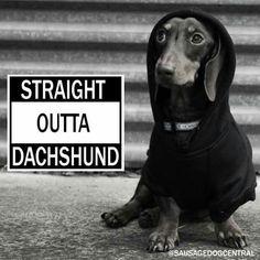 Straight outta dachshund.