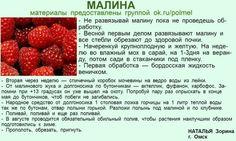 (31) Одноклассники Raspberry, Strawberry, Homestead Gardens, Green Life, Homesteading, Diy And Crafts, Fruit, Health, Flowers